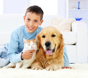 Remove Pet Odor and Stains From Your Carpet