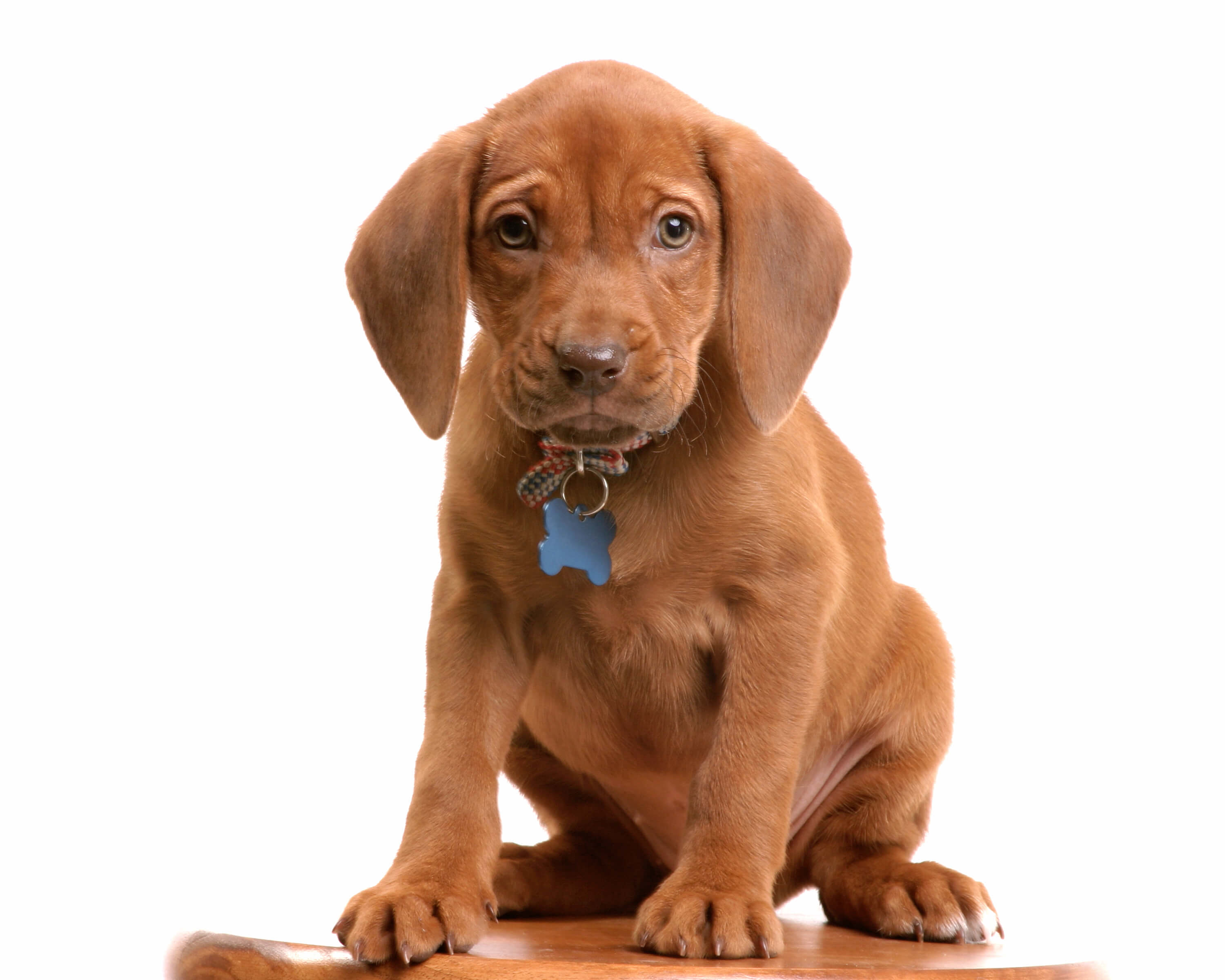pet urine removal virginia beach