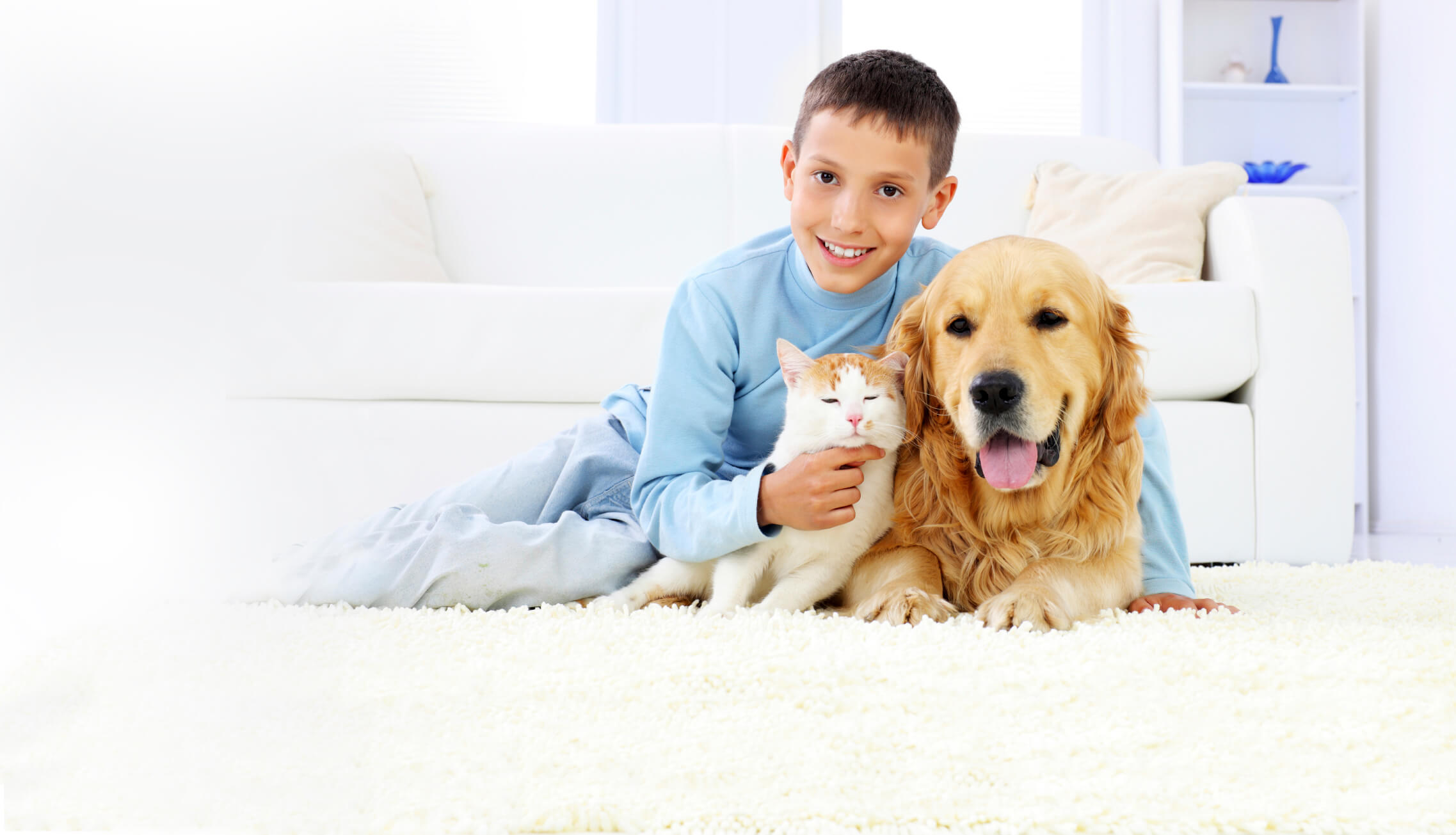 Is Tile or Stone the Better Flooring For Pets?