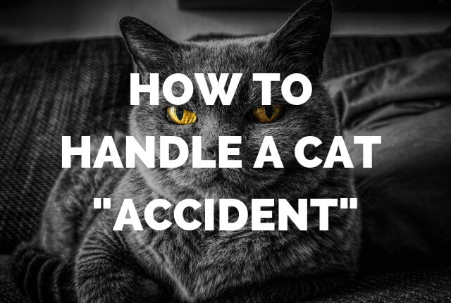 "How to Handle A Cat ""Accident"""