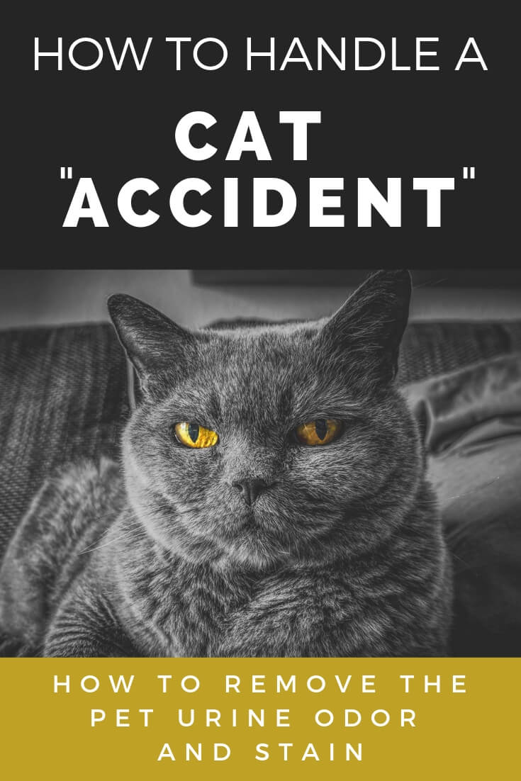 how to handle a cat accident