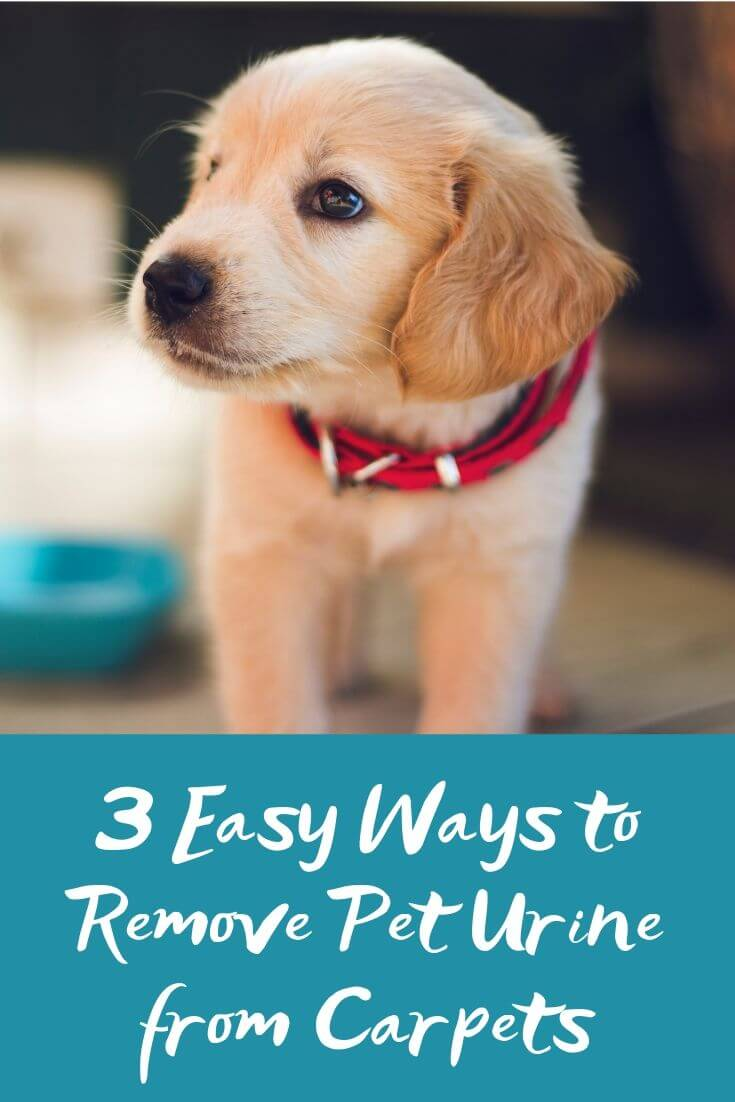 3 Easy Ways to Remove Pet Urine from Carpets