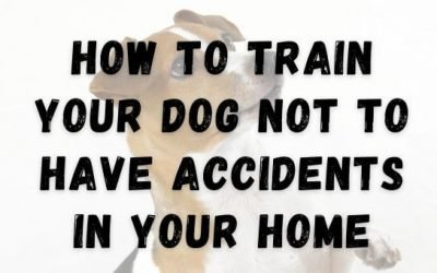 How to Train Your Dog Not to Have Accidents in Your Home